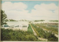 Greenhouses And Flower Gardens, Branford House