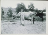 Young Woman With Cows