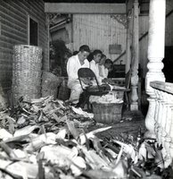 Men shucking corn at an outing of Bristol Brass Company employees celebrating the company's 100th anniversary