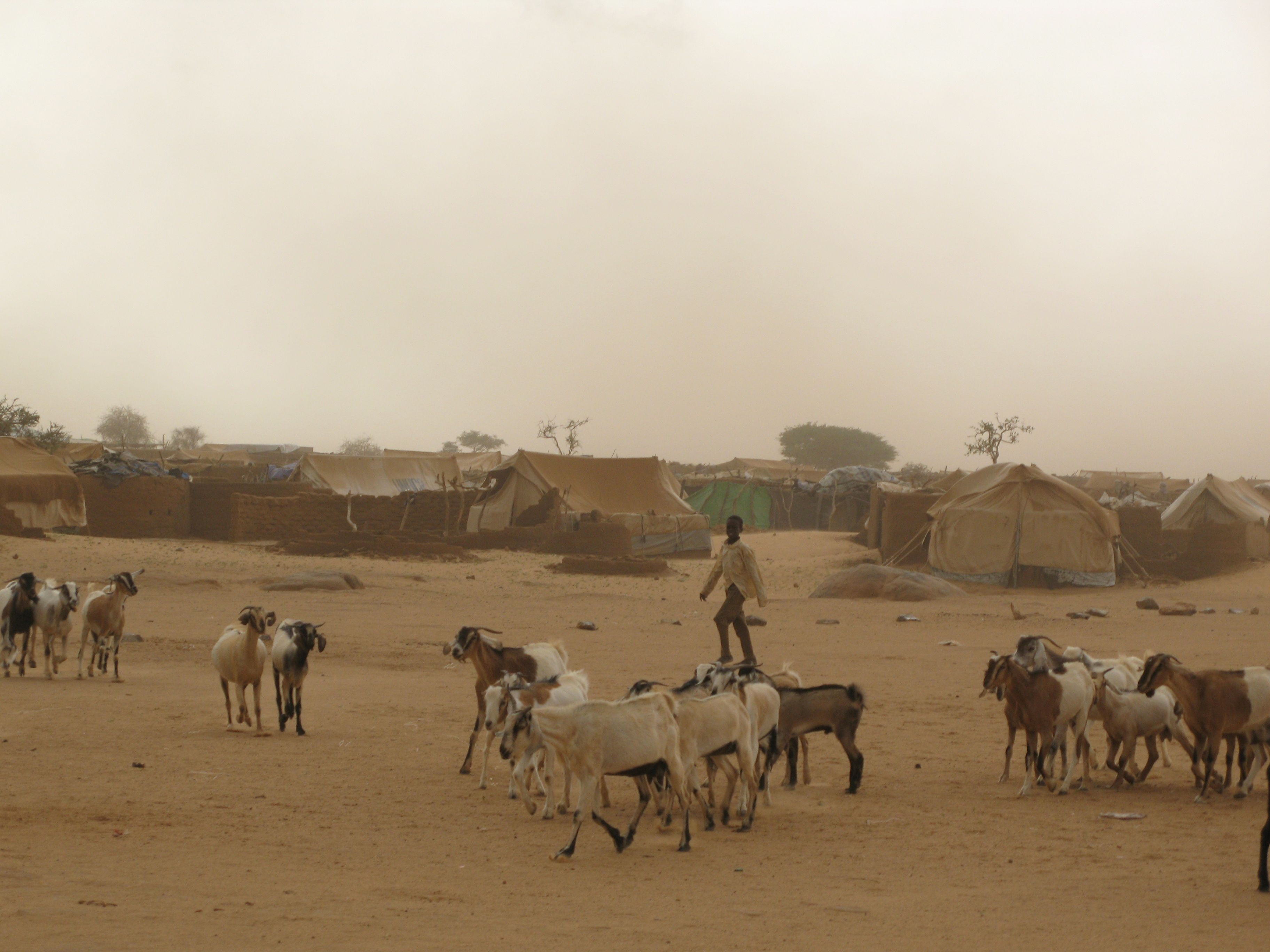 Goats wander along the outskirts of a camp for internally displaced persons (IDPs) along the border of Chad and Darfur