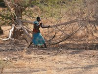 Nuba woman gathers firewood in Sudan