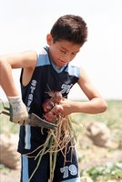 Ten Year Old American Migrant Worker Cuts Onions Instead Of Attending School